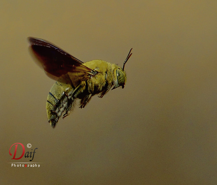 Photograph WASP by Daifallah Mansour on 500px