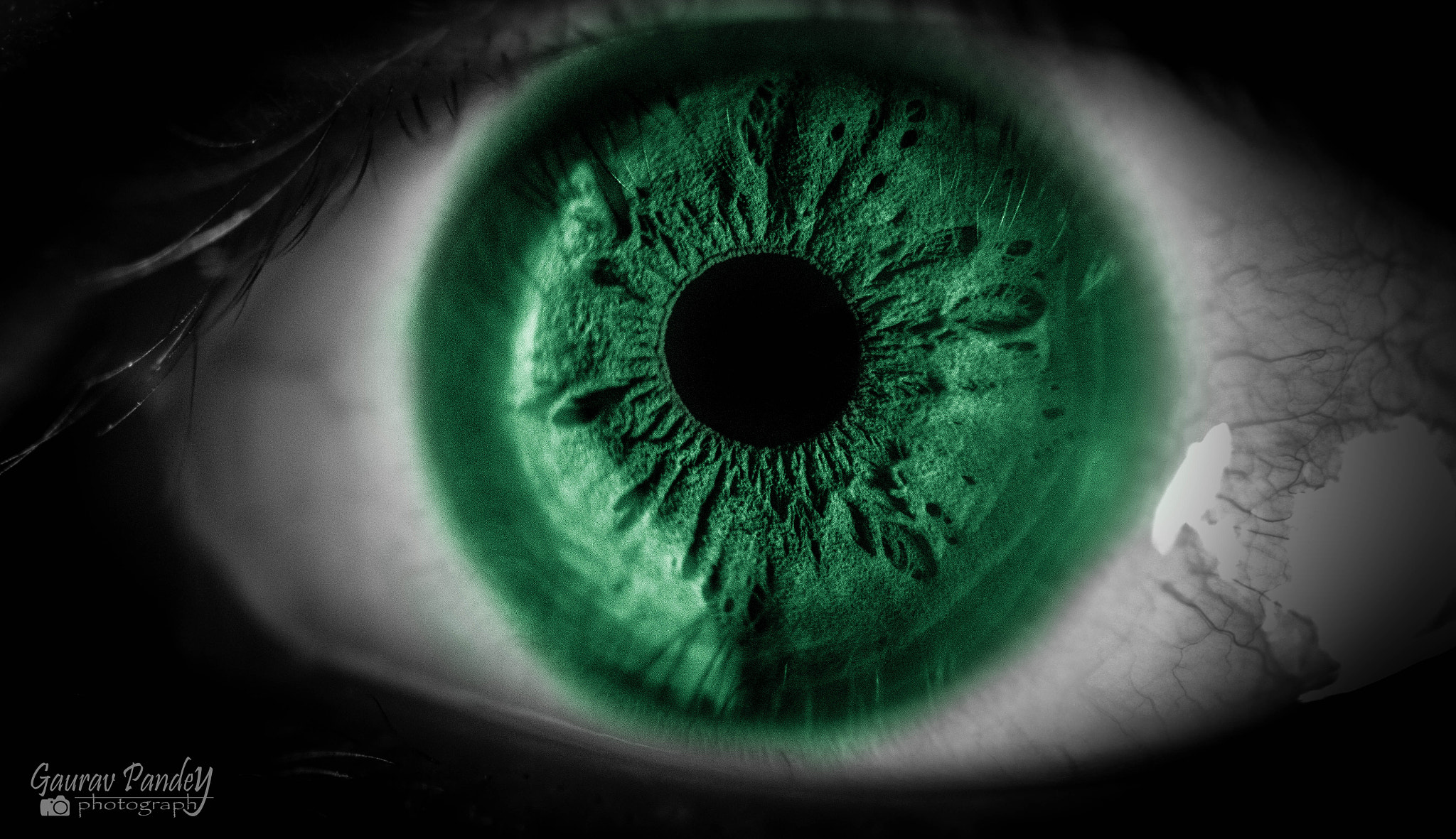 Photograph Green eyes by Gaurav Pandey on 500px