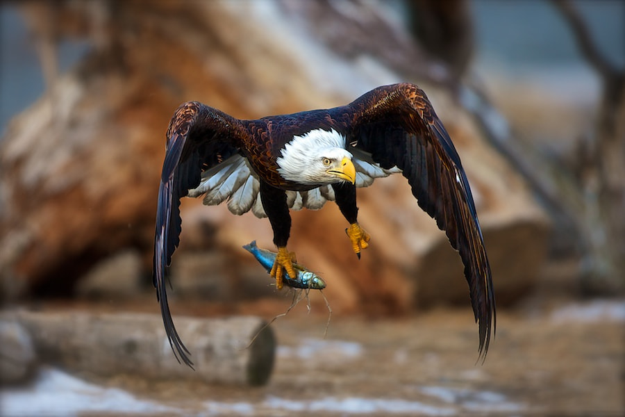 Photograph Stick And Fly III by Buck Shreck on 500px