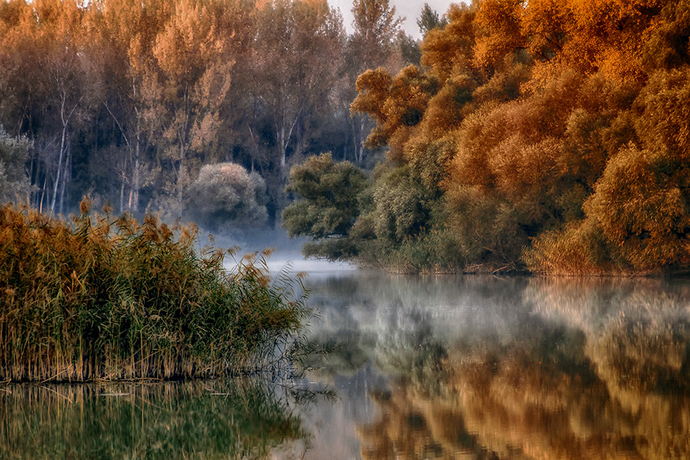 Photograph Autumn colors by Peter Talos on 500px