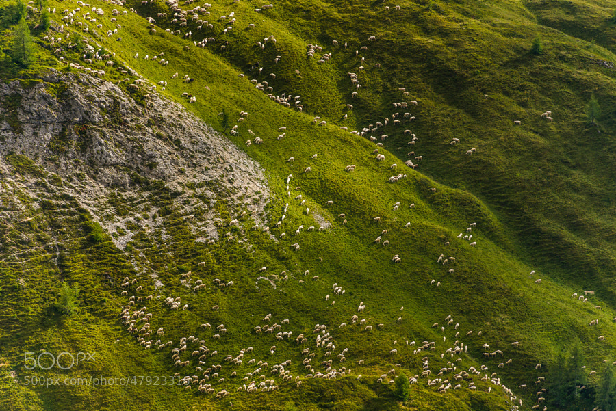 This photo was shot at Passo Giau one afternoon and my eyes catched the shape of the sheep like a wave across the green landscape.