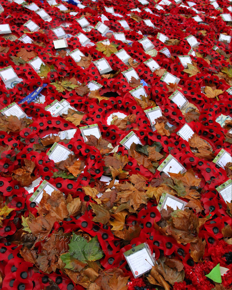 Photograph Remembering The Fallen by Mike Taylor on 500px