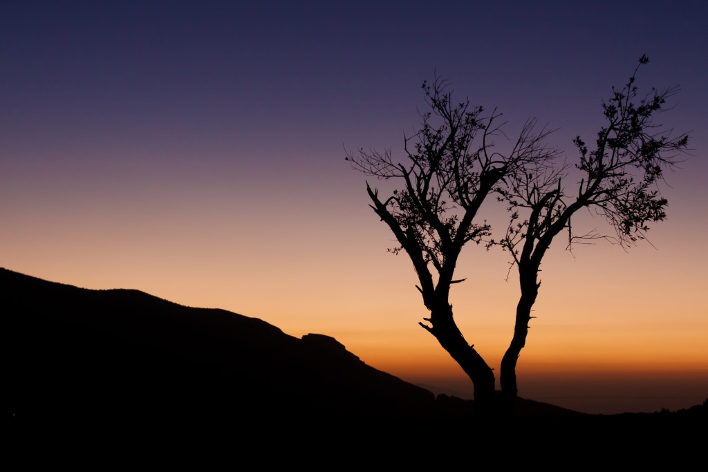 Photograph Tree Silhouette at Dawn - Oman by Daniel Nahabedian on 500px