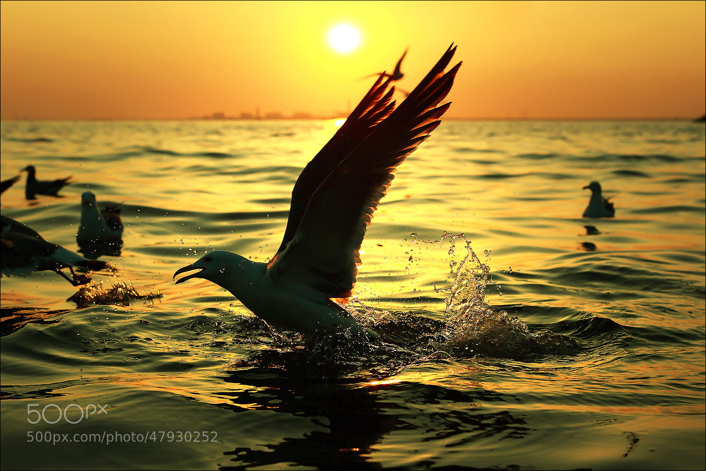 Photograph Beautiful wings by rainsphoto  on 500px