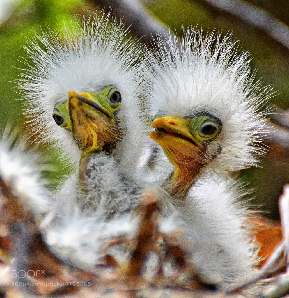 Photograph Hair Brothers Duo by Jeff Clow on 500px
