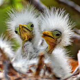 Hair Brothers Duo by Jeff Clow (jeffclow)) on 500px.com
