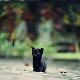 Lonely by Fazrin Chen (FazrinChen)) on 500px.com