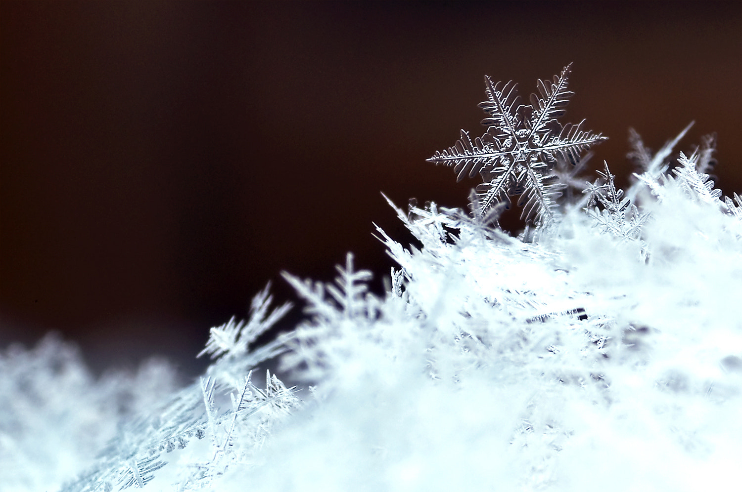 Photograph Flakes by Chris Ruijter on 500px
