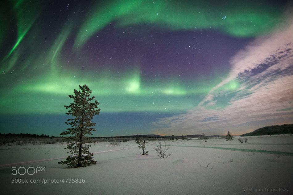 Photograph Aurora by Maxim Letovaltsev on 500px