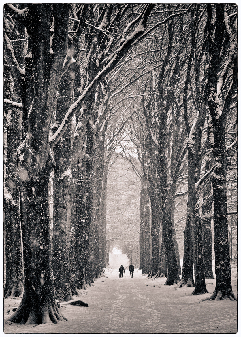 Photograph Winter's lane by Peter Vruggink on 500px