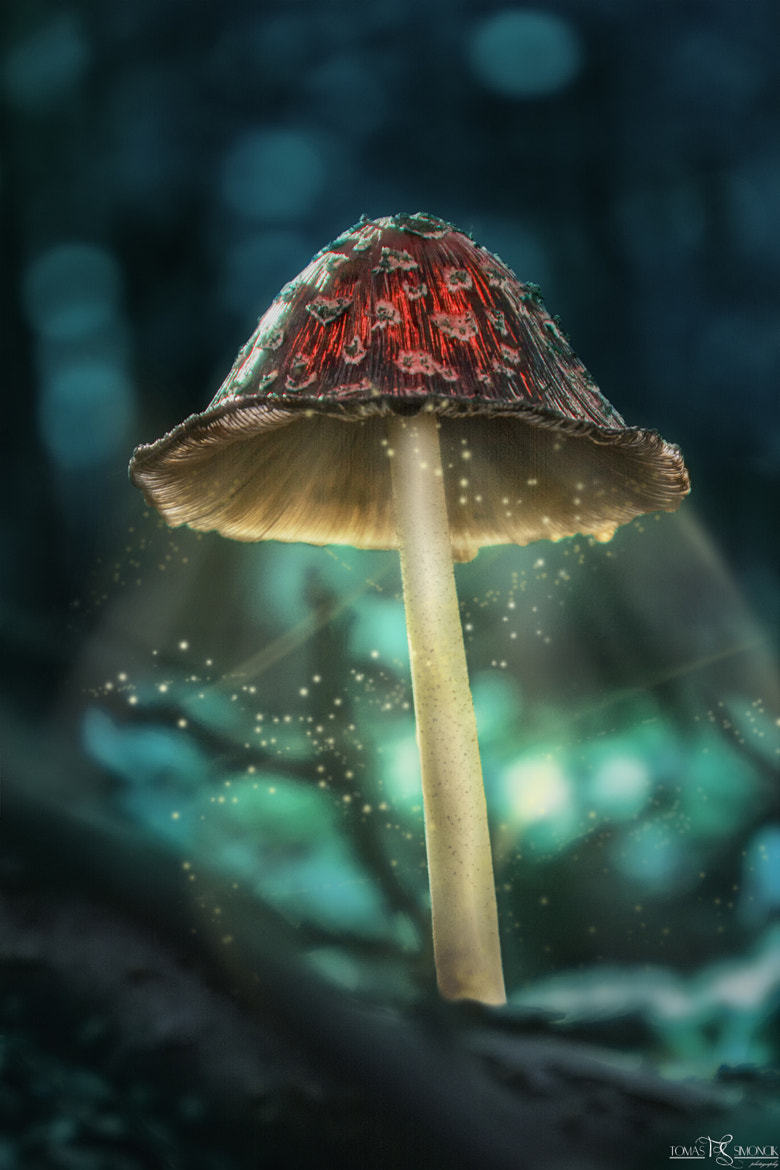 Photograph Magical Toadstool by Tomas Simoncik on 500px
