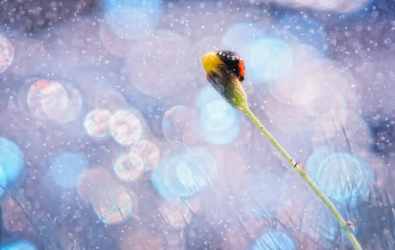 Photograph Snowstorm * by BLOAS Meven on 500px
