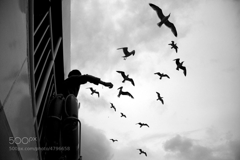 Photograph black dreams... by Onur DOĞMAN on 500px