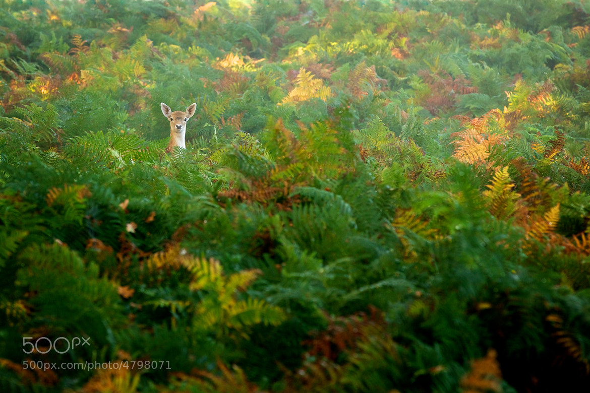 Photograph spotted by Mark Bridger on 500px