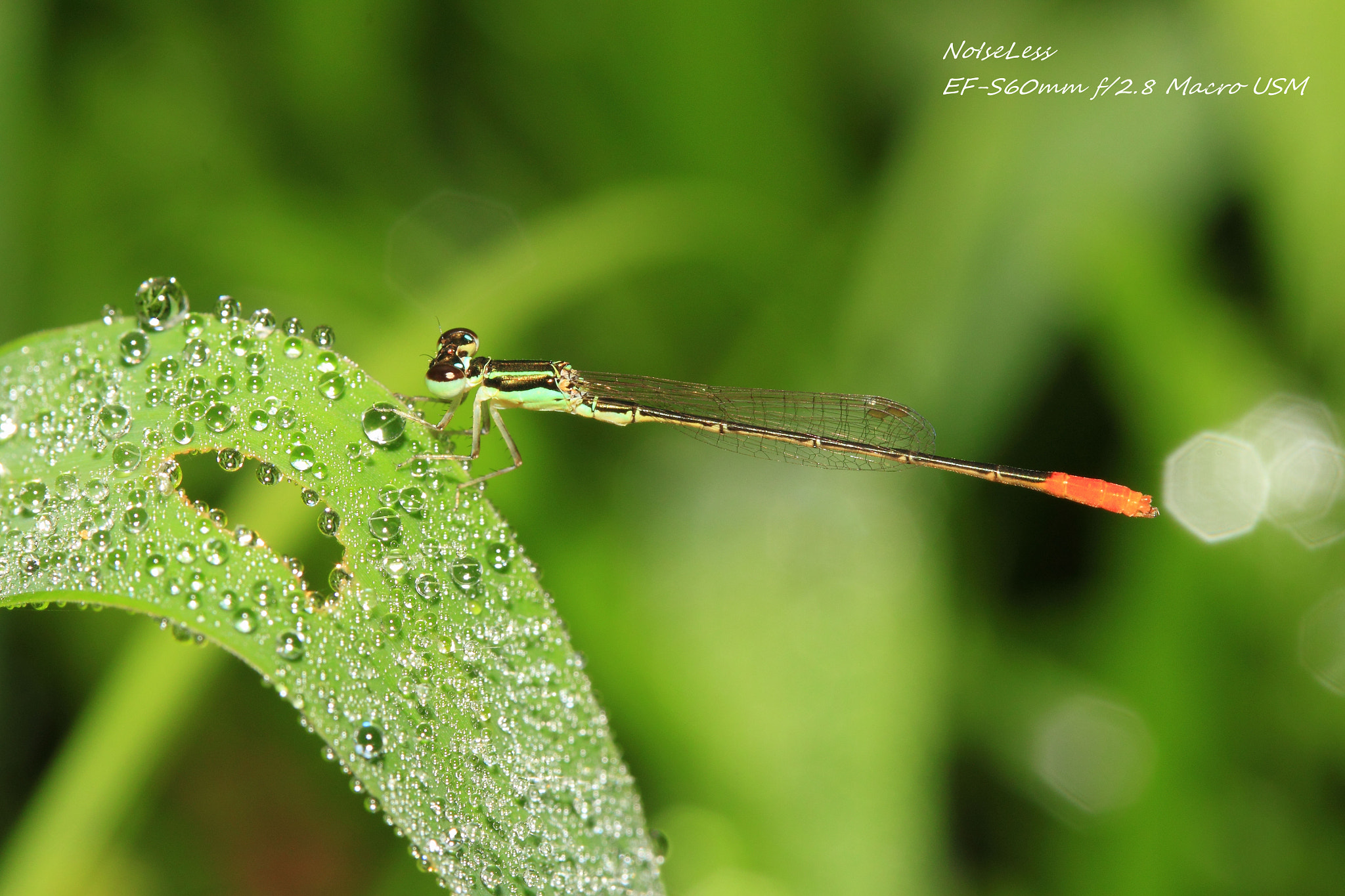 Photograph after rain by Noiseless Chen on 500px