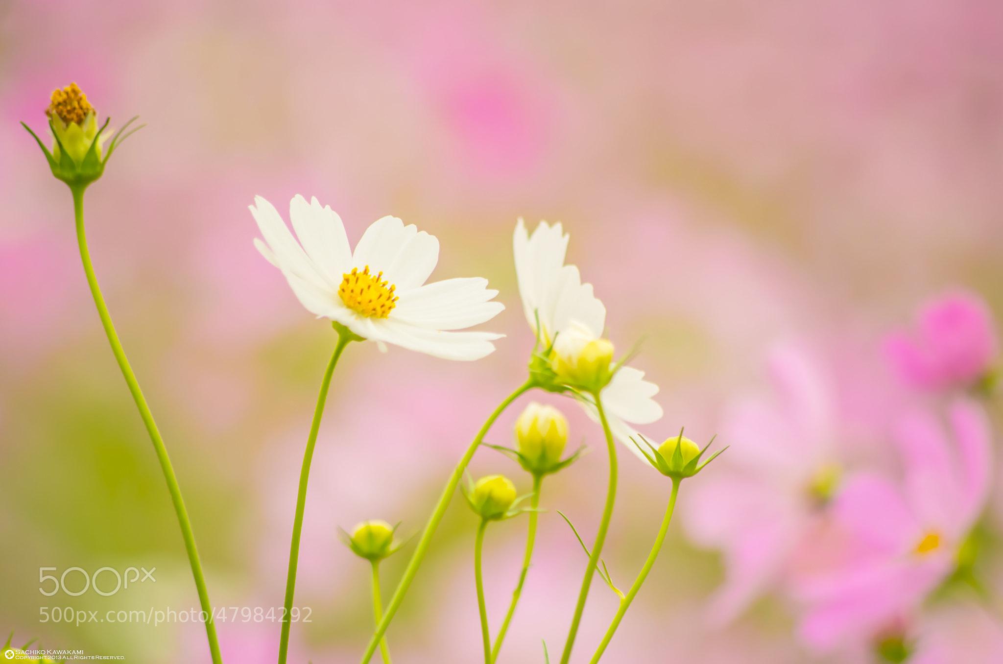 Photograph 美麗 by Sachiko Kawakami on 500px