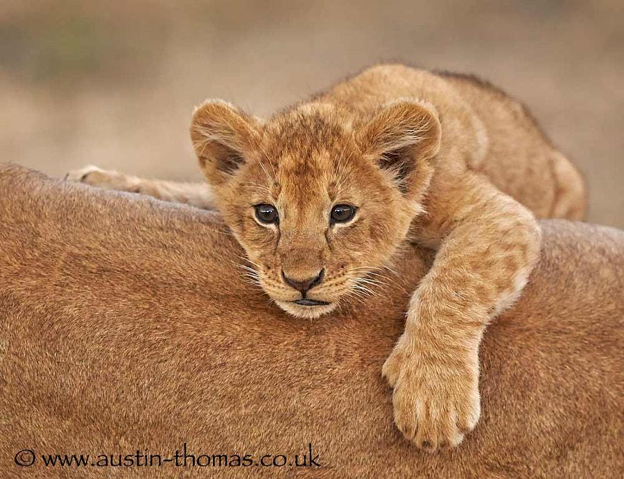 Lazy days in the Masai Mara...
