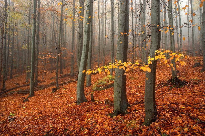 Photograph Between beech by Petr Poppl on 500px