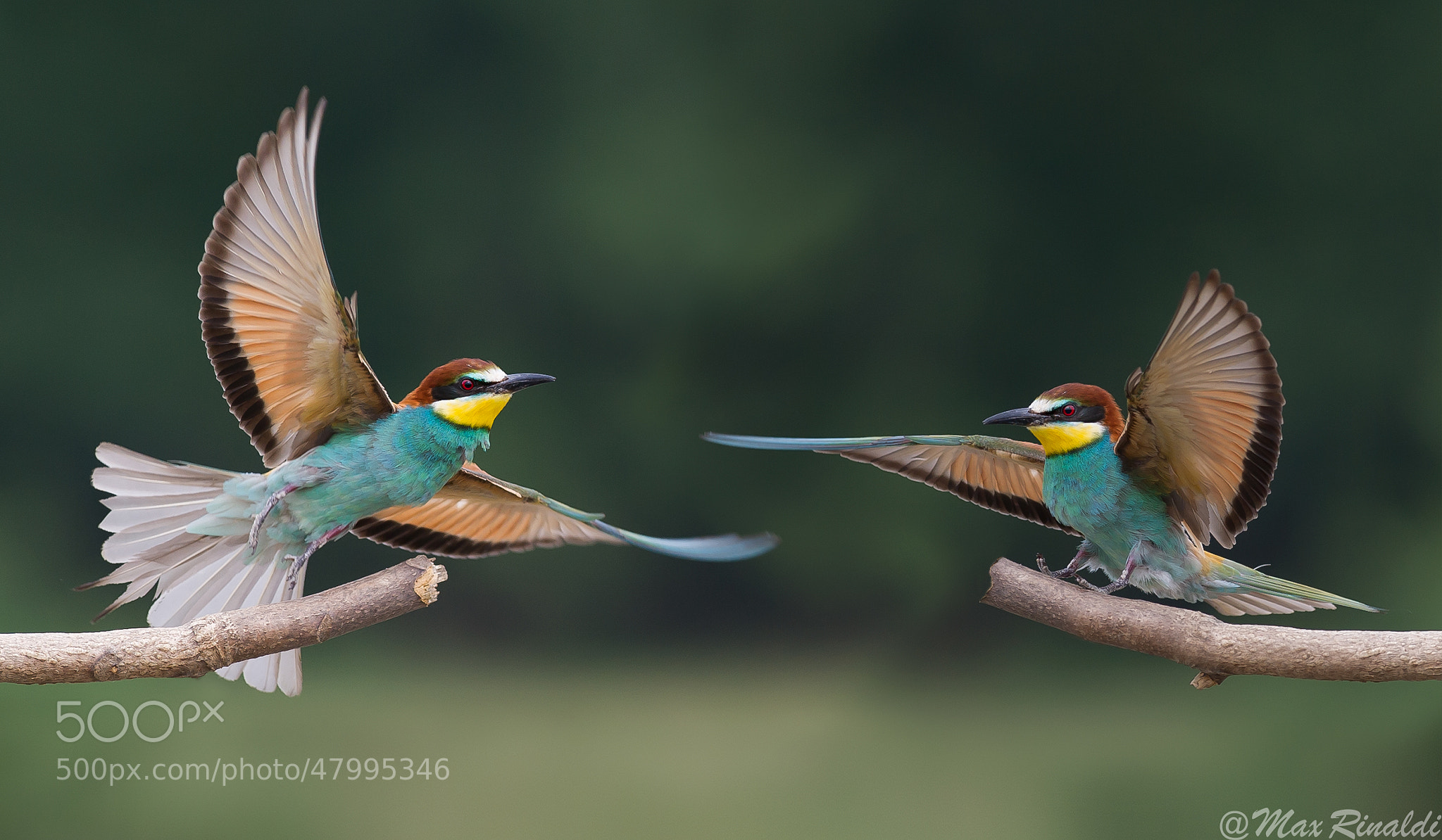 Photograph Wings by Max Rinaldi on 500px