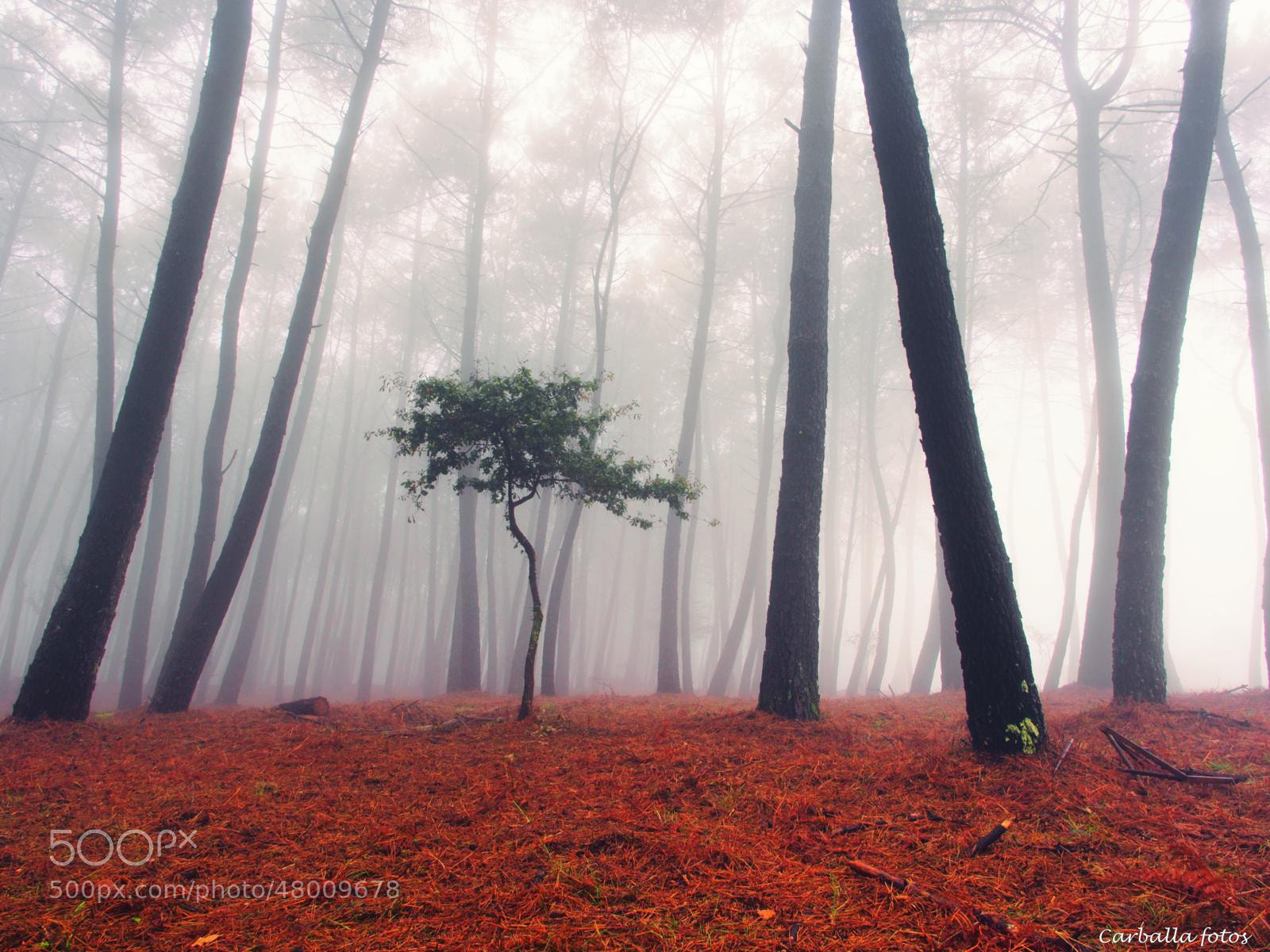 Photograph Alone in the Crowd by Guillermo  Carballa on 500px