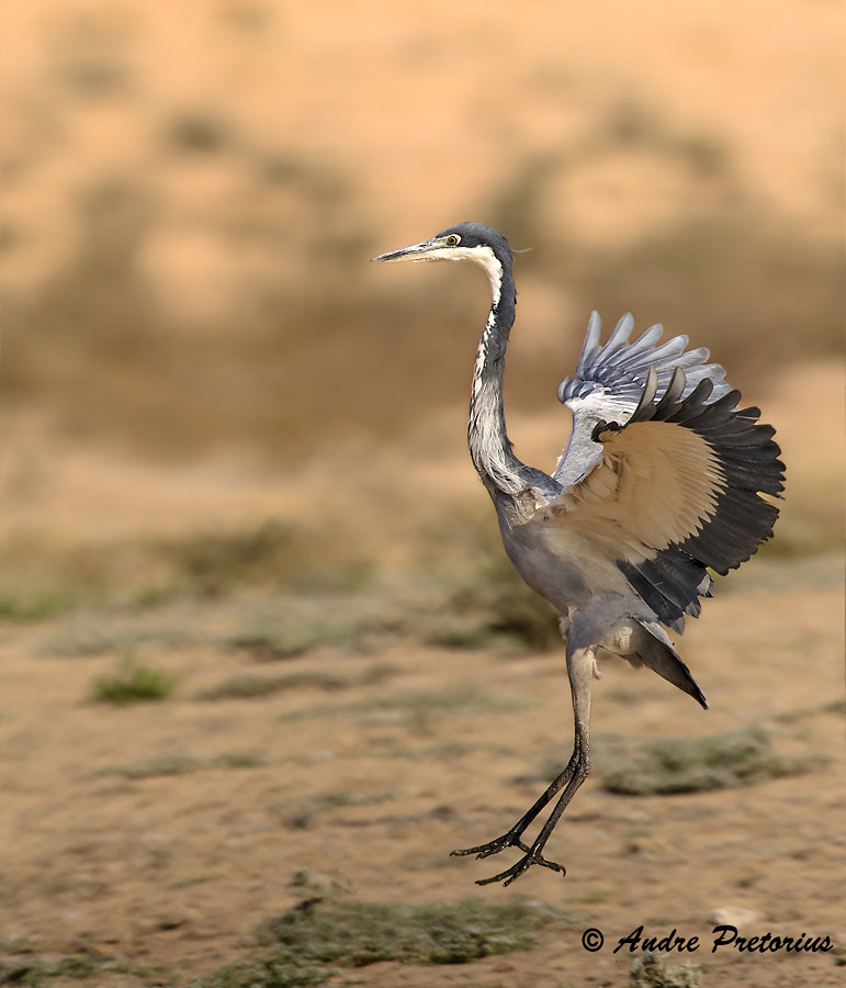 Photograph Riding the Wind by Andre Pretorius on 500px