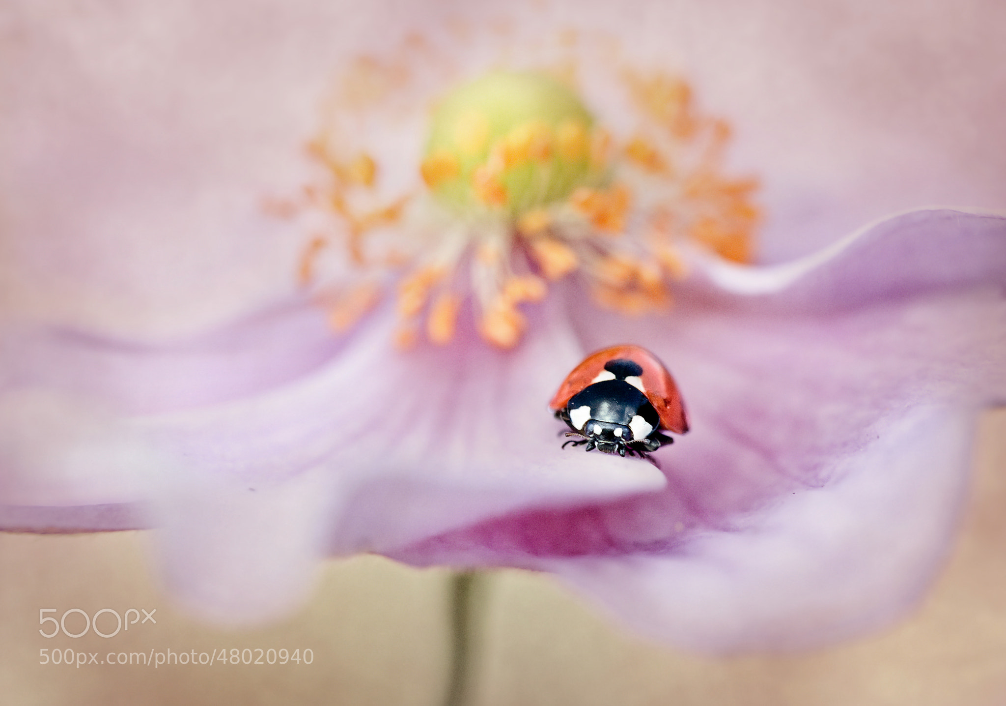 Photograph Carousel lady by Mandy Disher on 500px