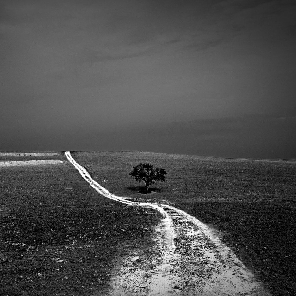 Photograph Country Road by Vili Gošnak on 500px