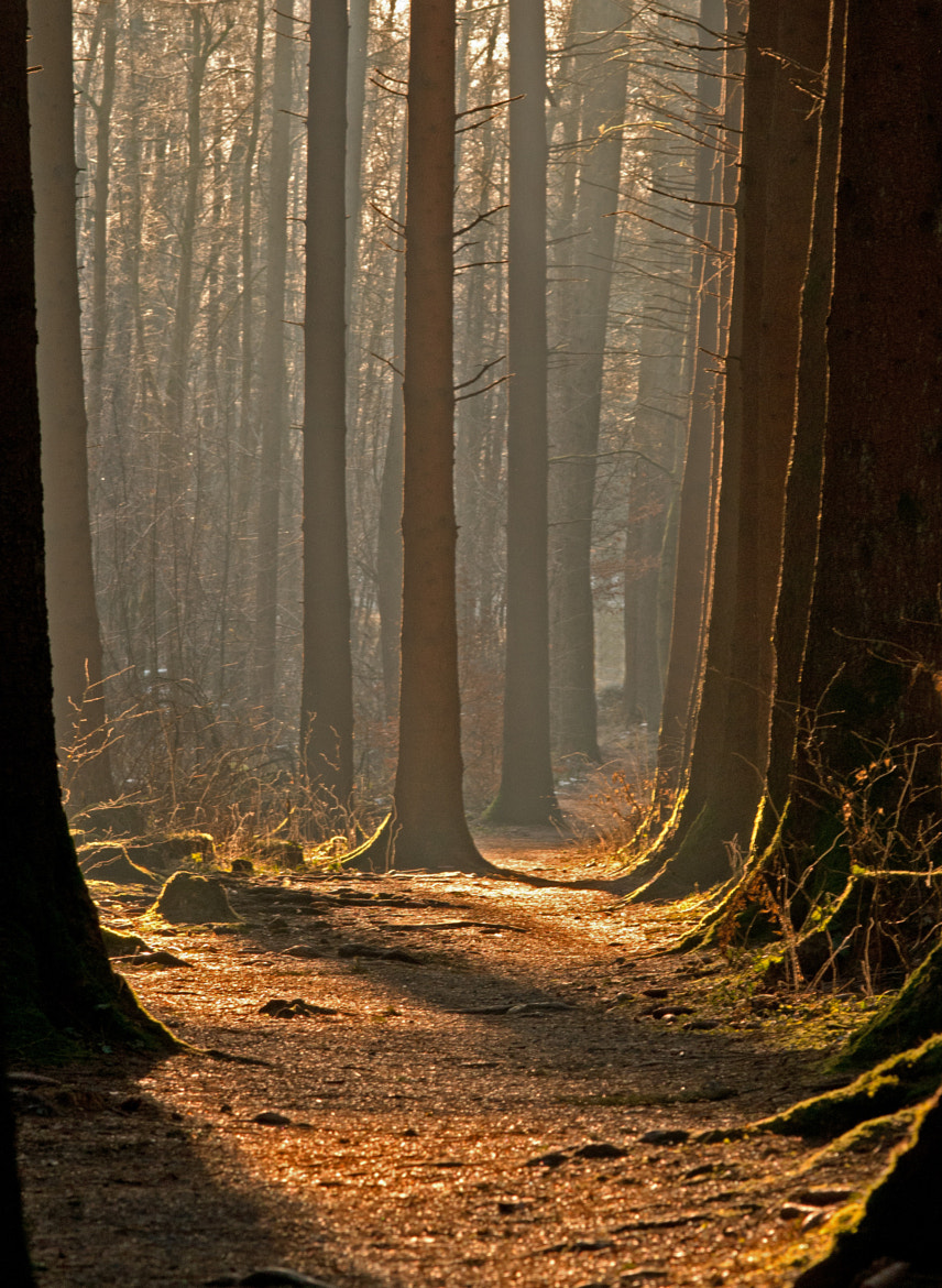 Photograph mysterious forest by Thomas Jäger on 500px