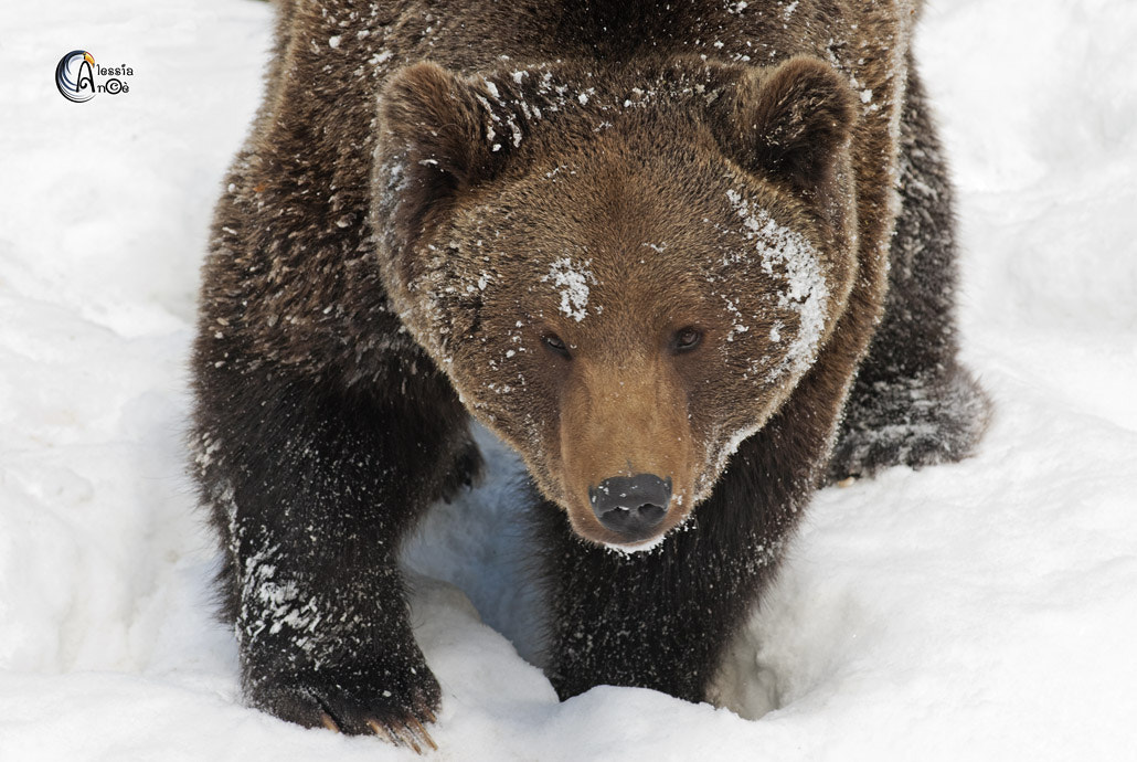 Photograph Bear by Alessia Noè on 500px