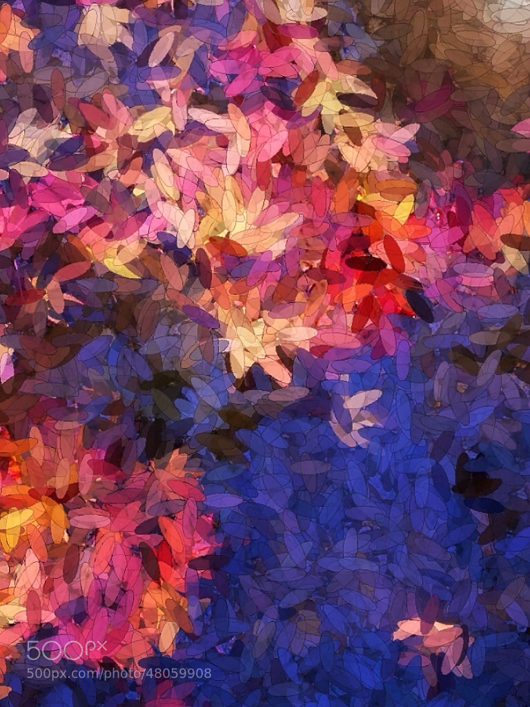 Photograph Maple leaves in a pond by Dekka  on 500px