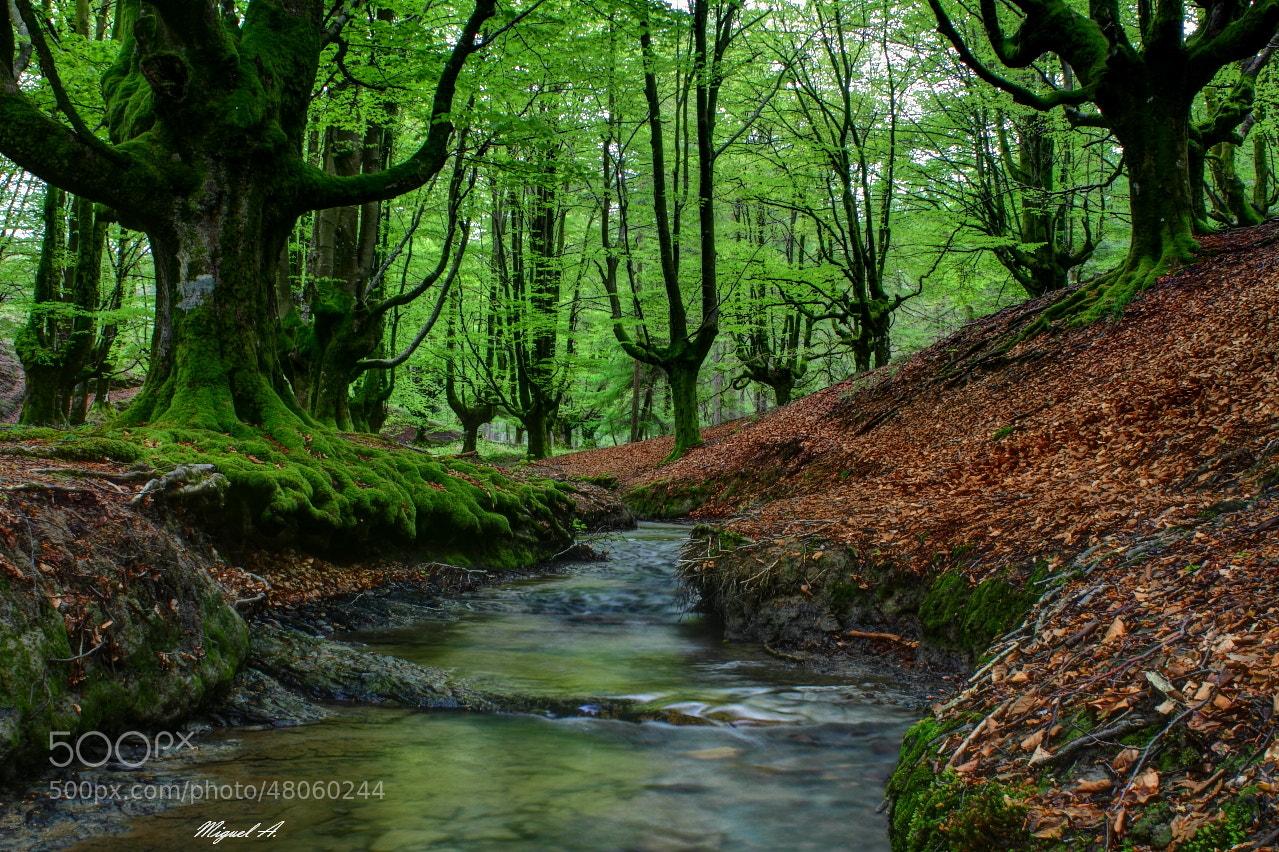 Photograph El bosque encantado/ by Miguel A.  on 500px