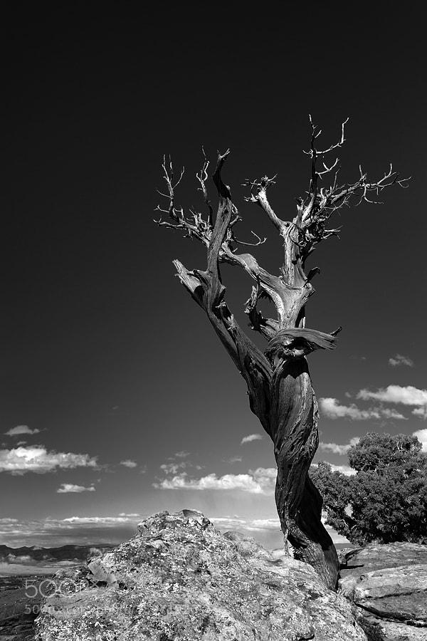 Photograph Dead Tree by Jimmy De Taeye on 500px