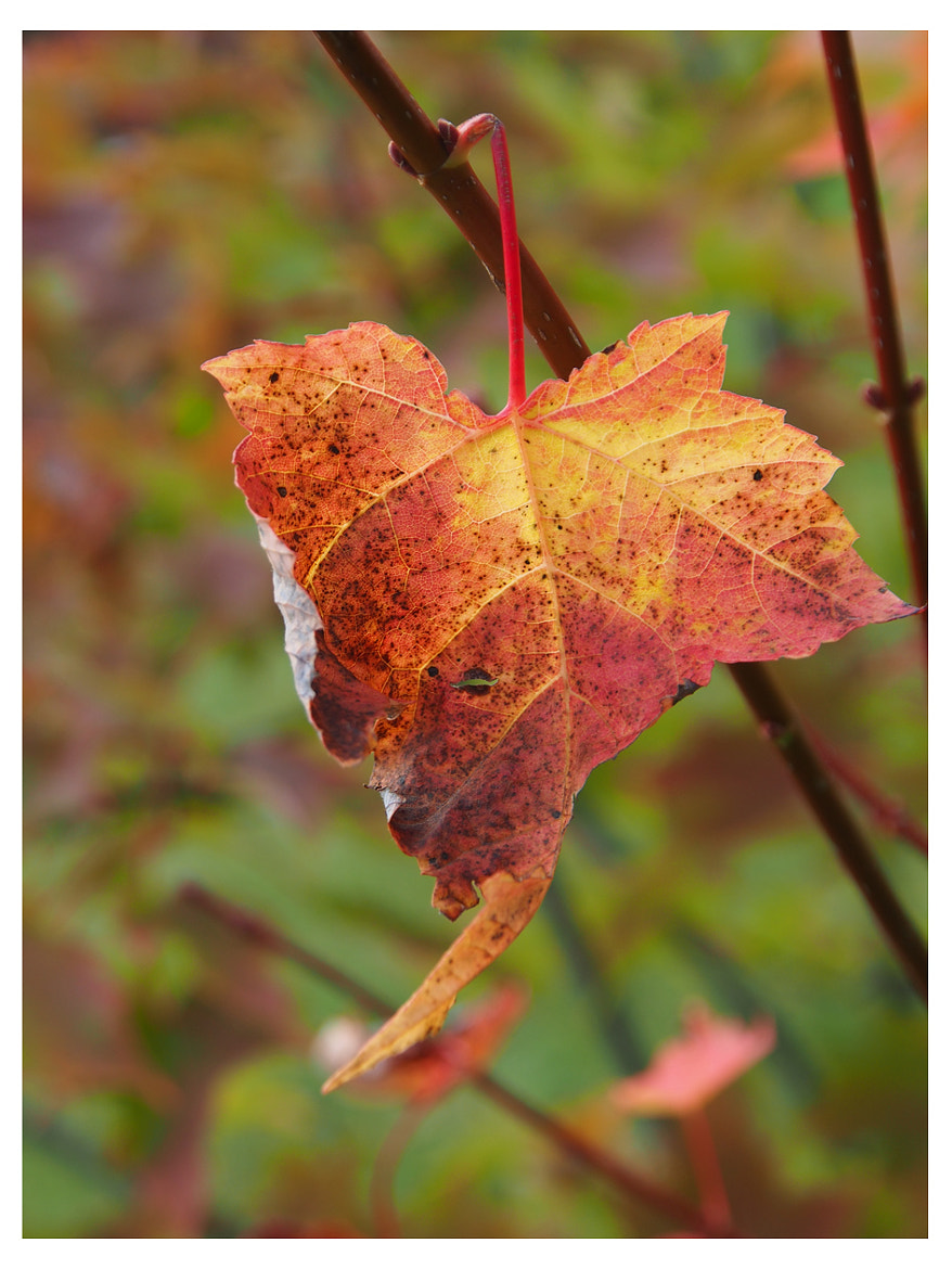 Photograph Feuille by Annie Pronovost on 500px