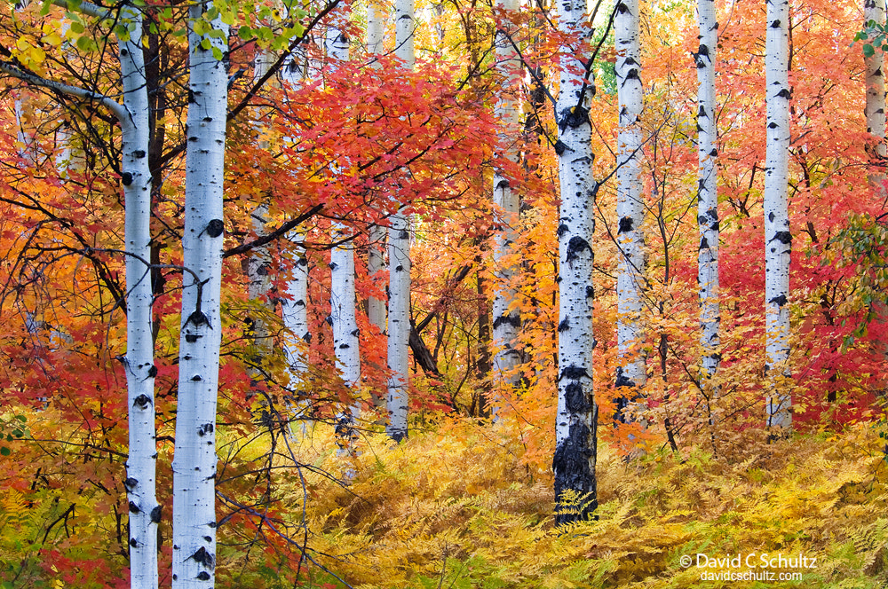Photograph Autumn in the Wasatch by David C. Schultz on 500px