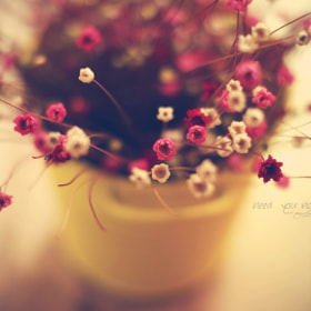 Untitled by Thach Anh Nguyen (windybear)) on 500px.com