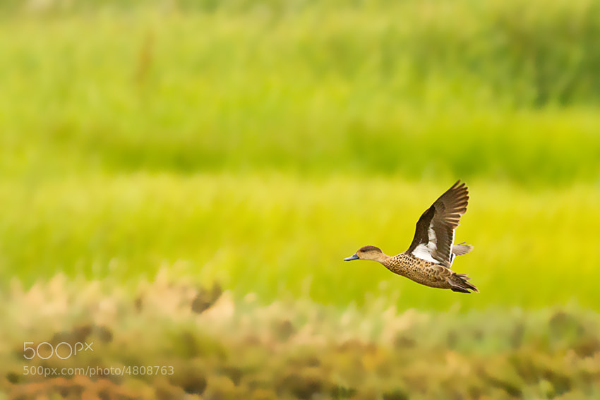 Photograph FLIGHT by Migara Photography on 500px