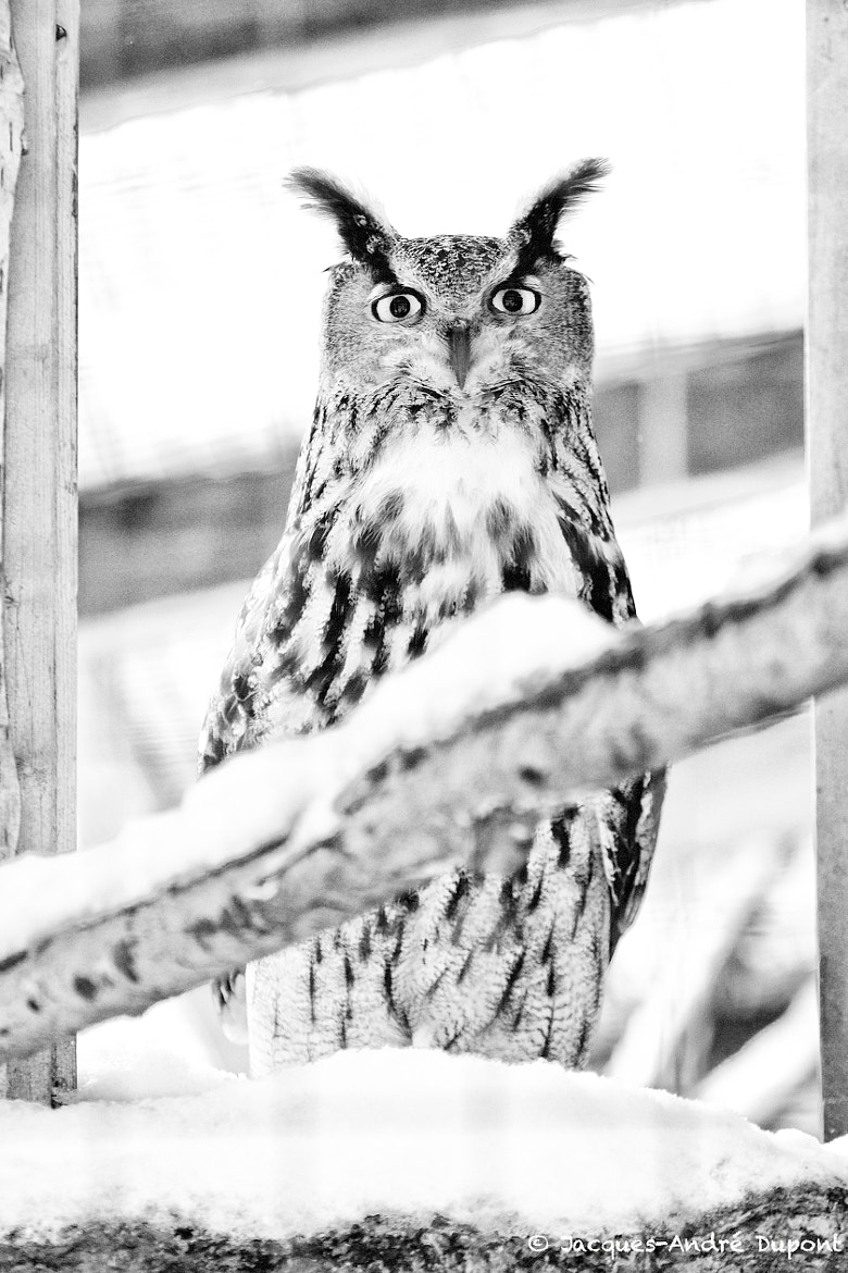 Photograph Winter Owl in the Barn by Jacques-Andre Dupont on 500px