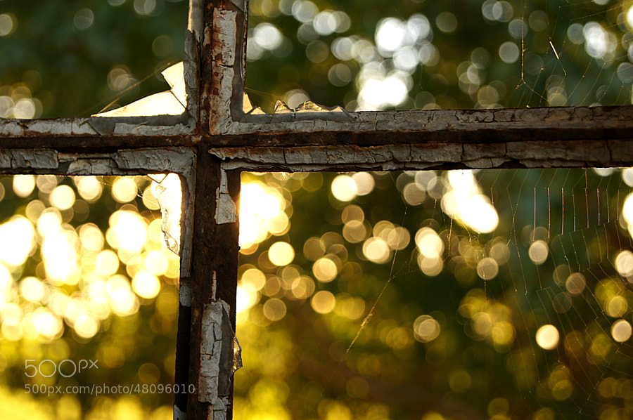 Photograph Bokeh outside my window by Kristian D. Hansen on 500px