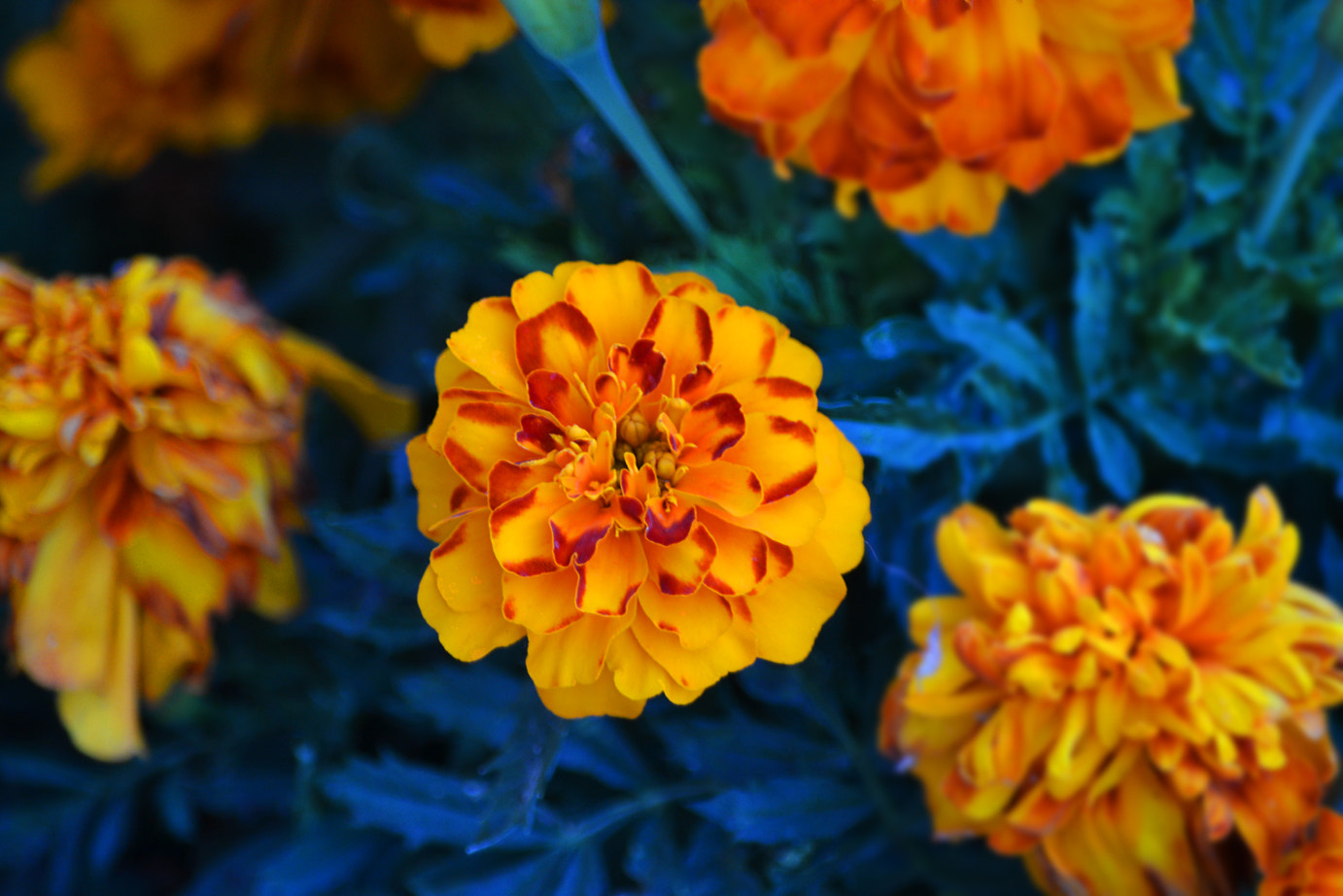 Photograph Flowers & colours by Eleonora Spisni on 500px