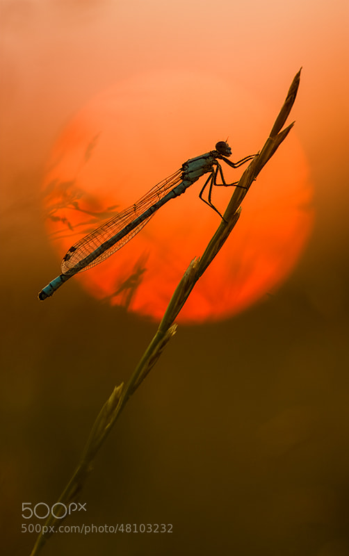Photograph Dragon Sunset II by Gary Howells on 500px
