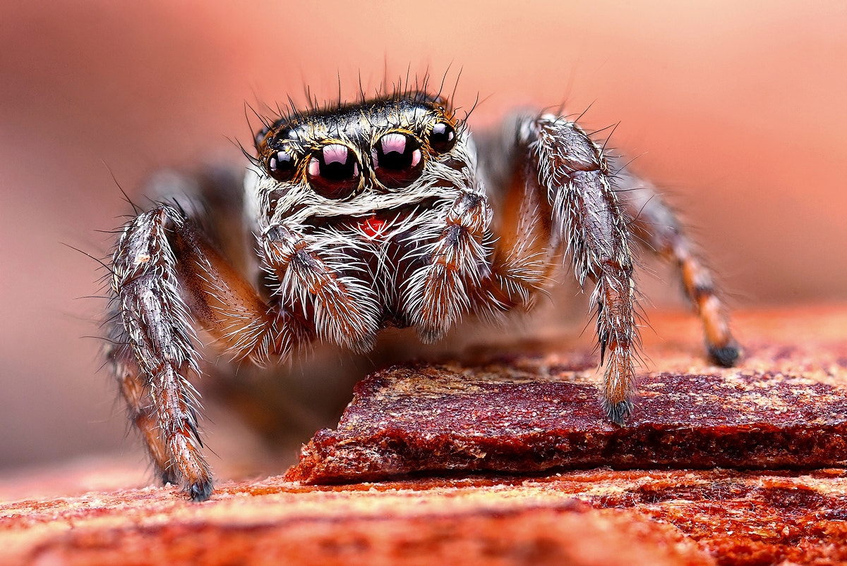 Photograph Jumper II by Dusan Beno on 500px