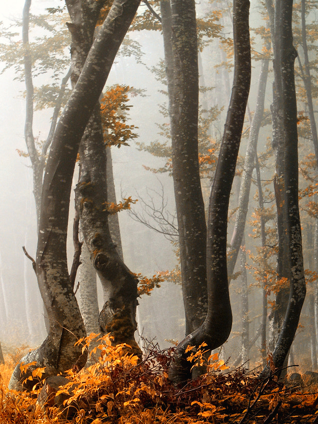 Photograph Dancers in the fog by Irina Kostova on 500px