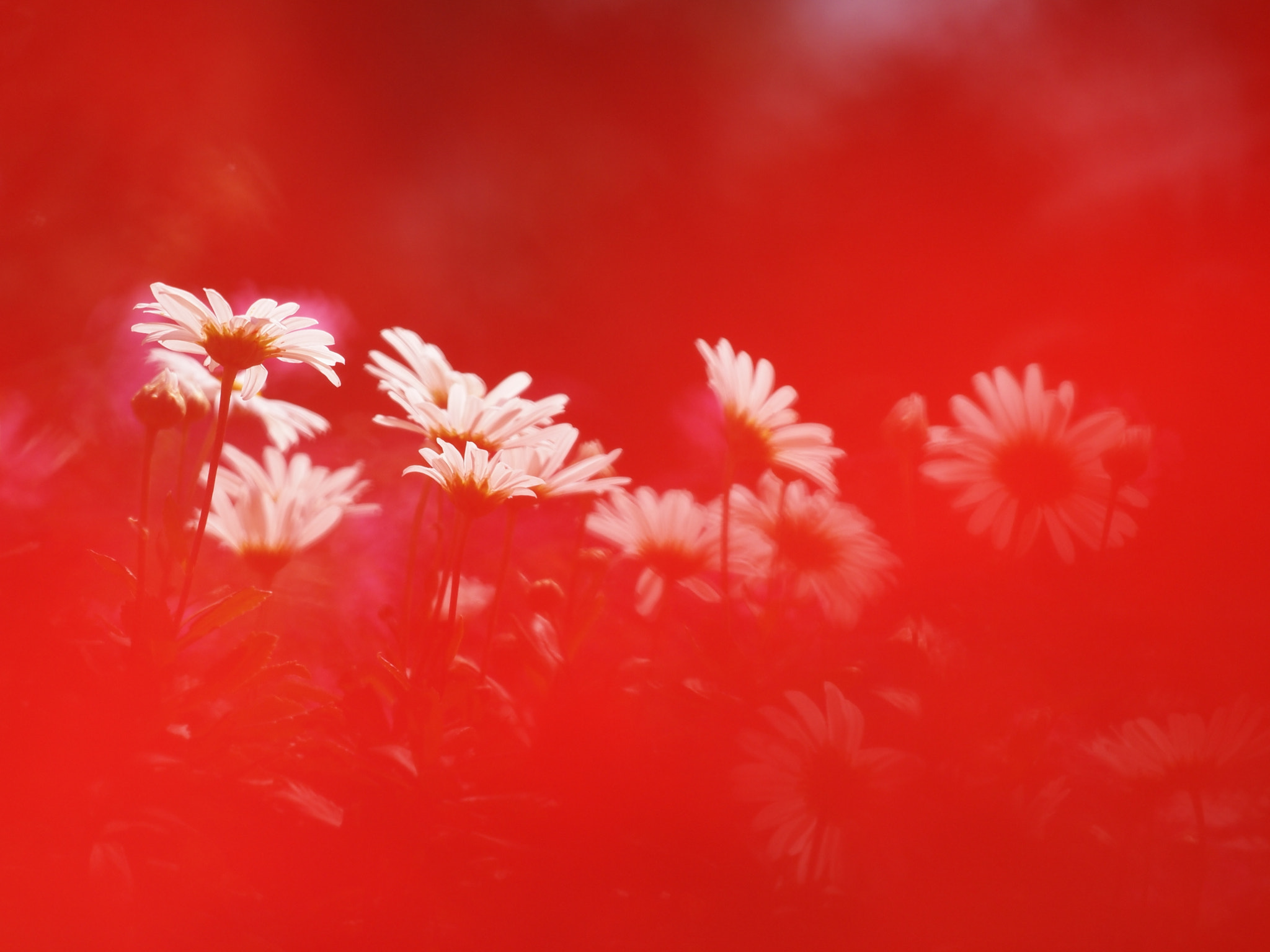 Photograph Passion by Kaz Watanabe on 500px