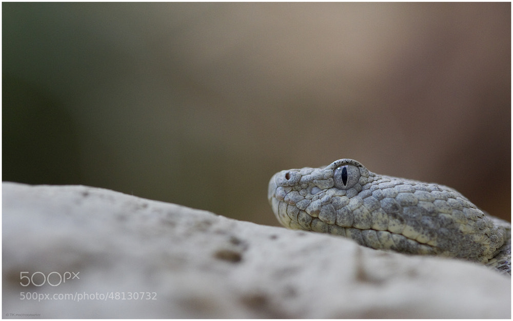 Photograph Watching YOU! by Tobi K on 500px