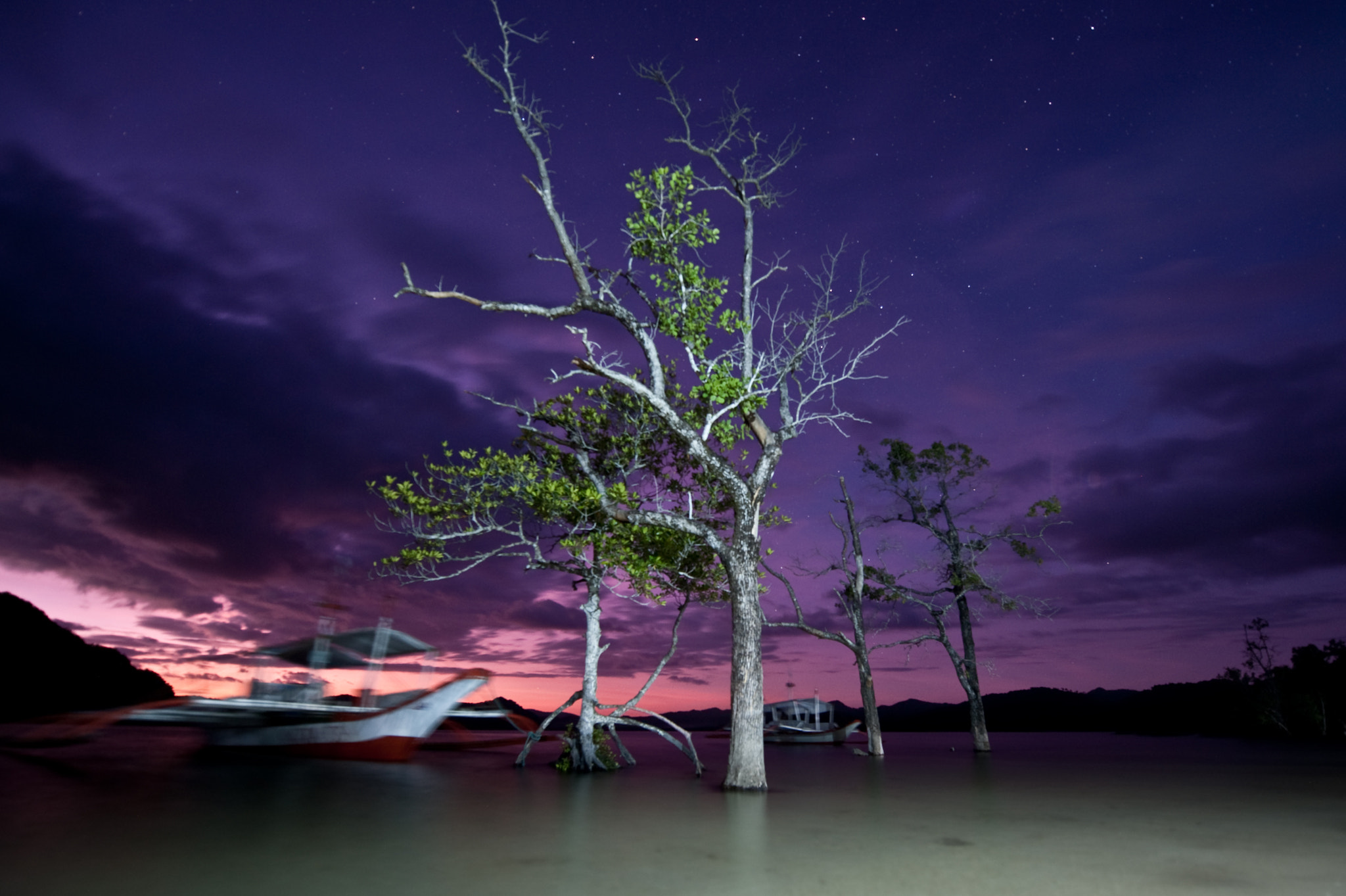 Photograph A Tree at Night :: 30 Seconds by Sam Gellman on 500px