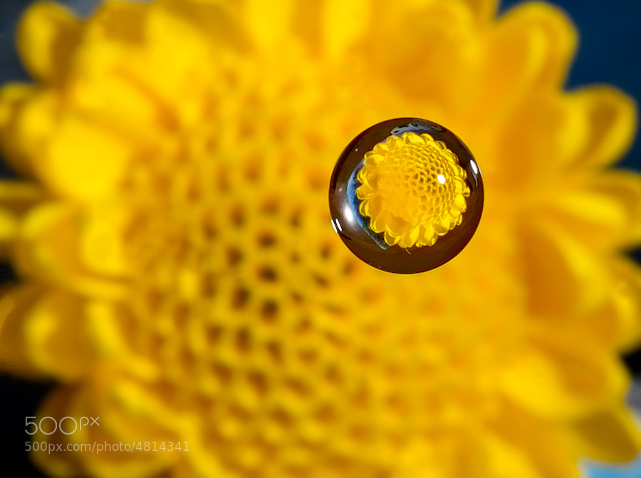 Flower Reflection by Millan Sanchez (MillanSanchez)) on 500px.com