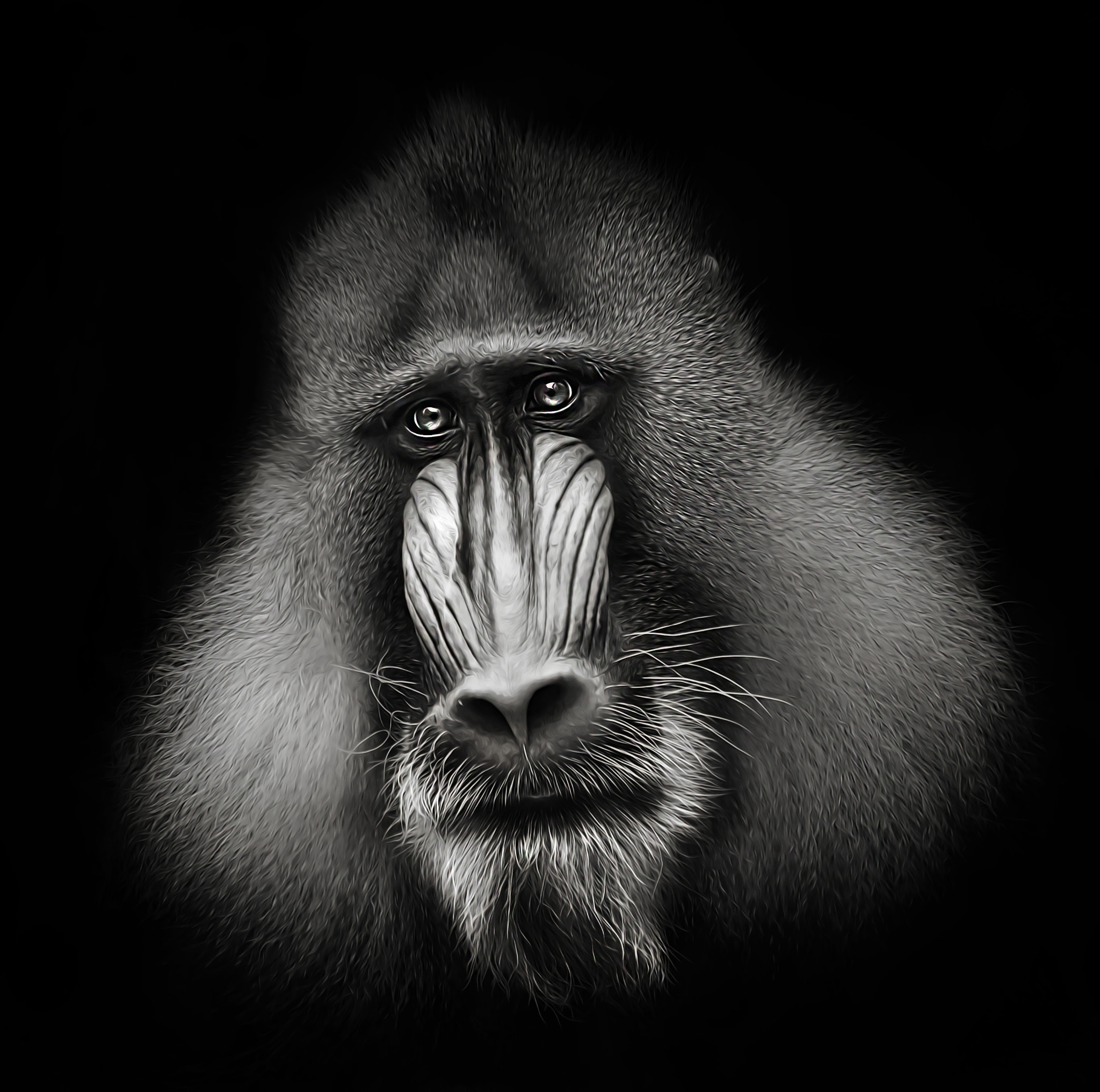 Photograph mandrill by Detlef Knapp on 500px