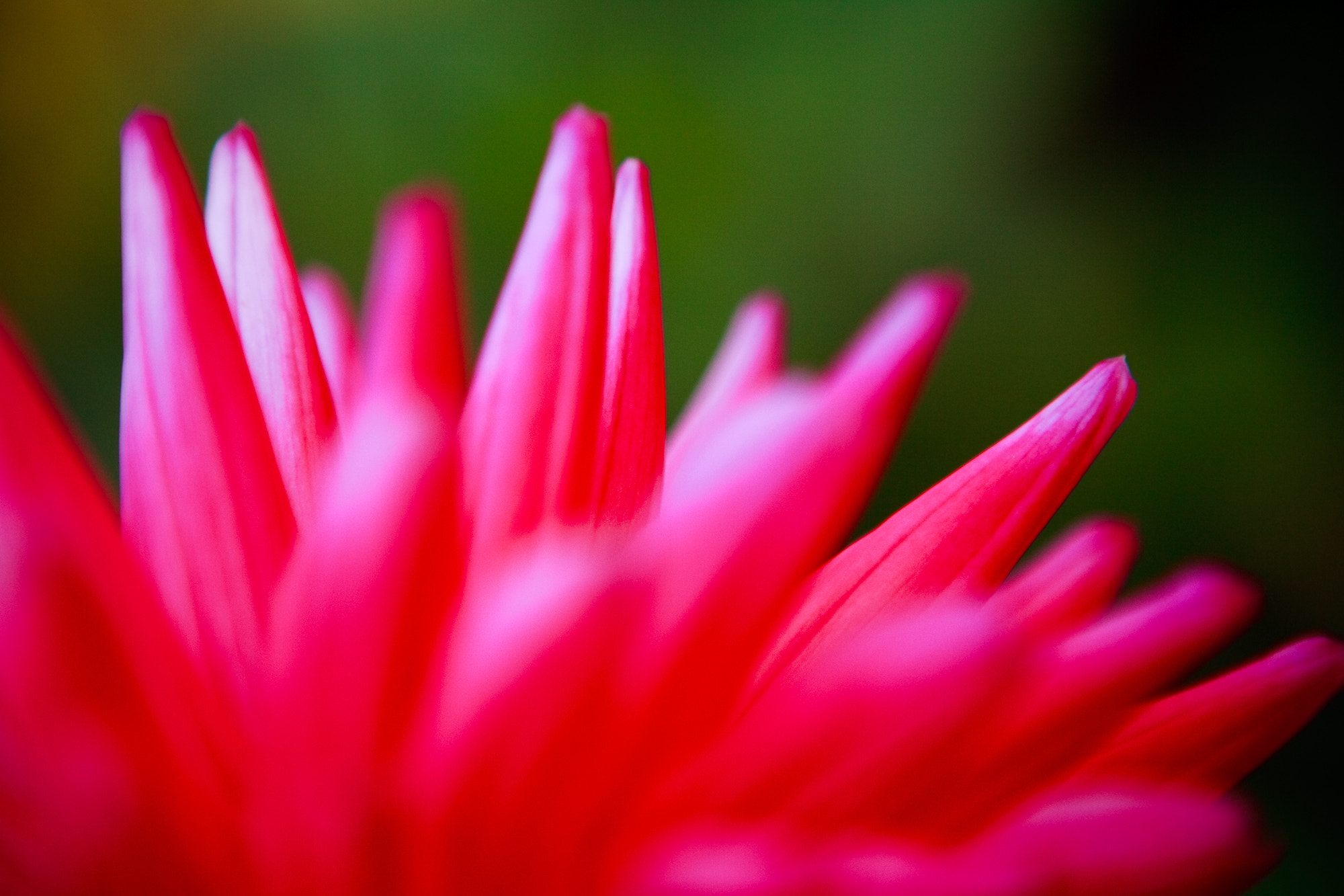 Photograph Pretty in pink by Tristan Rayner on 500px