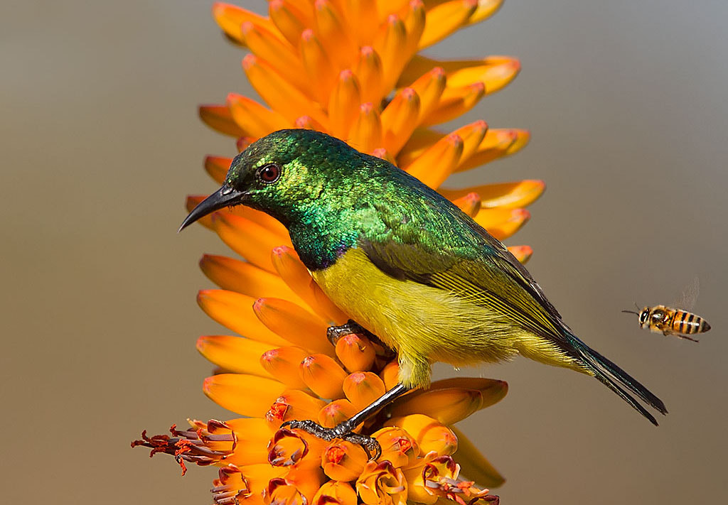 Photograph Bee Hind Me by Chris Kotze on 500px
