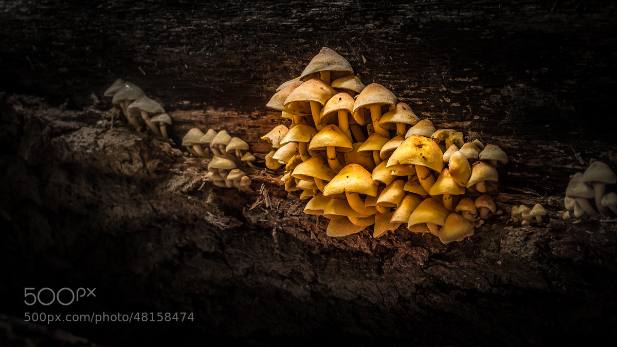 Photograph Funghi by Rudy Denoyette on 500px